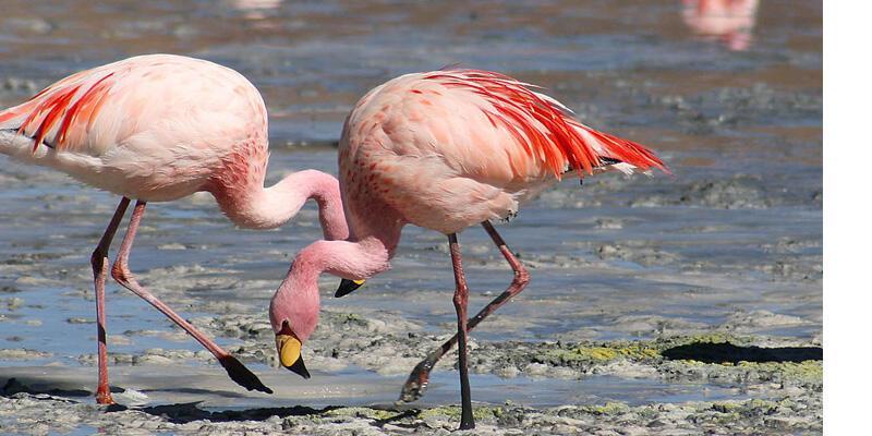 Flamingolara otoban tehdidi