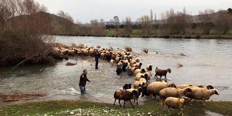 Çoban ve koyunları AFAD kurtardı