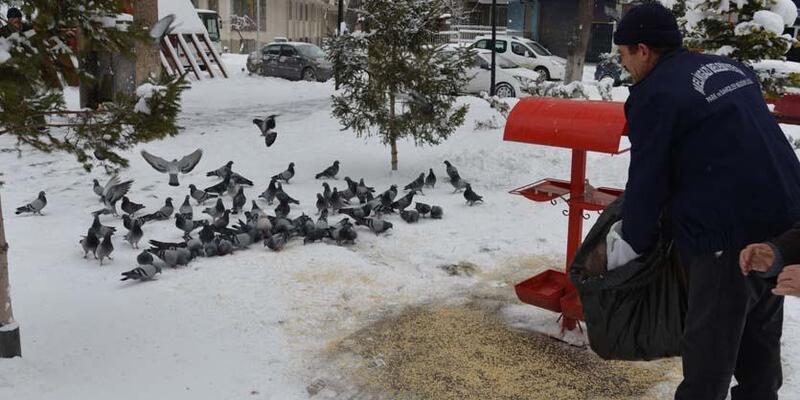 Melikgazi'de sokak hayvanlarına gıda desteği