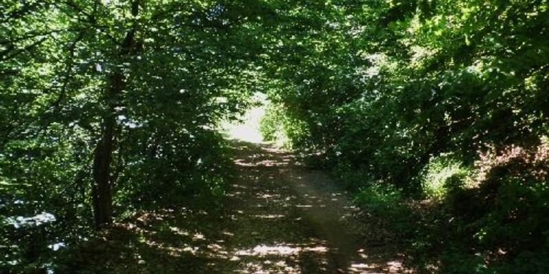 Ormanda bulunan iki cesedin kimlikleri tespit edildi