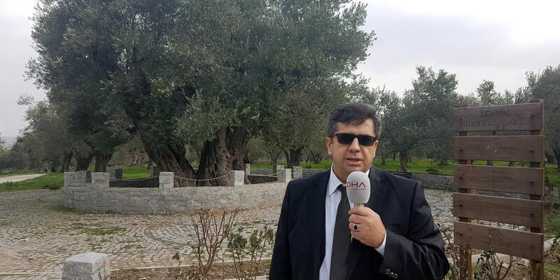 Kırkağaç'taki 'anıt zeytin ağacıHz. İsa ile yaşıt' iddiası