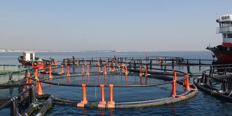 Mersin'de sahilindeki balık çiftlikleri kaldırıldı