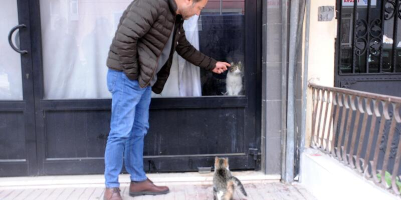 Mahalleli, 20 gündür dükkanda mahsur olan kedi için seferber oldu