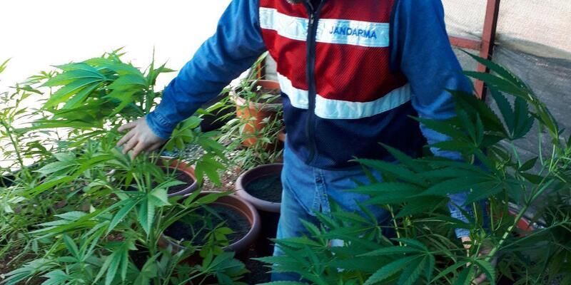 Tarsus'ta sera tipi çadıra uyuşturucu operasyonu