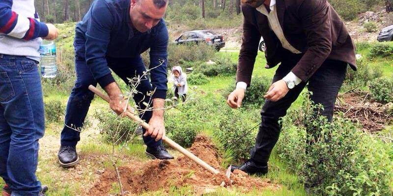 Afrin şehitleri anısına zeytin fidanı diktiler
