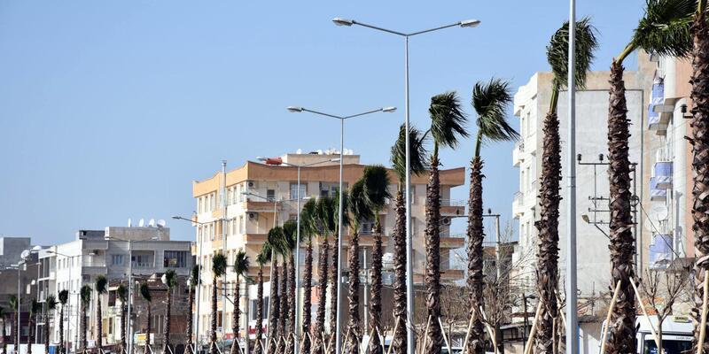 Nusaybin'de yeni Mardin karayoluna palmiye ağaçları dikiliyor