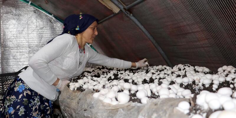 Samsun'da 15 mantar tesisinden 11'ini kadınlar kurdu