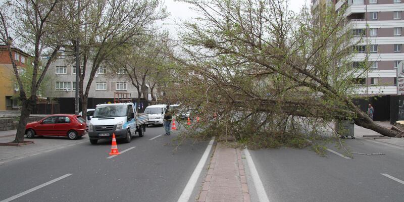 Kayseri'de fırtınada ağaçlar kökünden söküldü