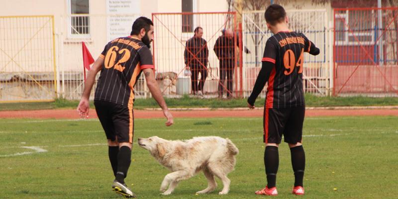 'Stadın kadrolu köpeği' yine görev başında