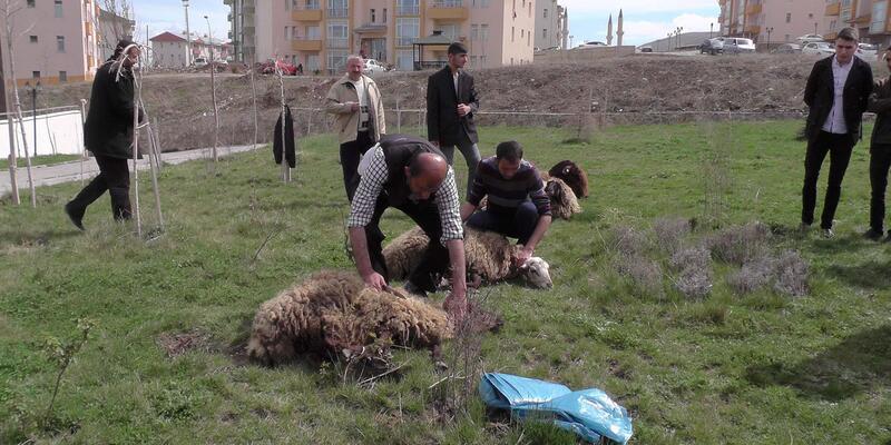 Muş'ta Afrin şehitleri için kurban kesildi