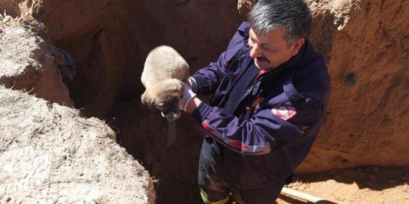 2 metrelik çukura düşen yavru köpeği itfaiye ekibi kurtardı