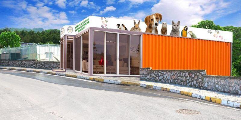 Körfez sokak hayvanları için klinik yapılacak