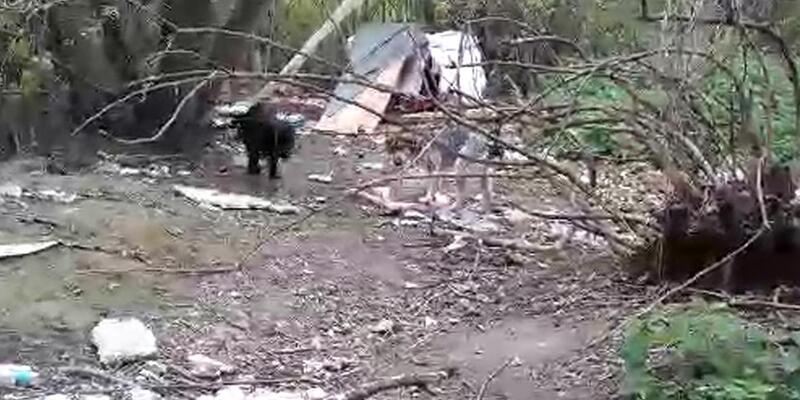 Köpekler can çekişirken yaşananları gözyaşları içinde anlattı