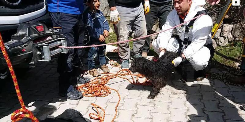 Kuyuya düşen köpeği AFAD ekibi kurtardı