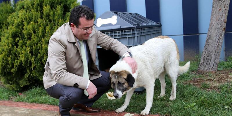 Sokak hayvanları Atakum'da mutlu
