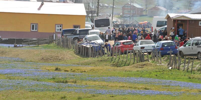 2 haftada35 bin kişi gezdi, 'Mor Yayla'da ezilen çiçekler erken kayboldu