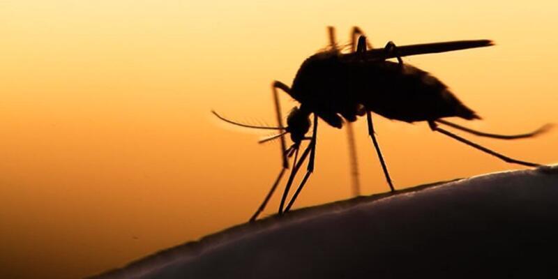 Nijerya'da yılda 300 bin kişi sıtmadan ölüyor