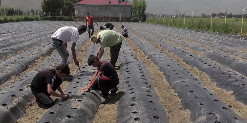Muş'ta çiftçilere, 200 dekarlık çilek bahçesi