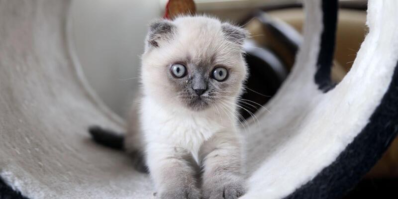 Kaybolan kedisini bulanı ödüllendirecek