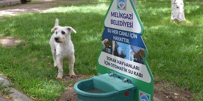 Sokak hayvanları için parklaraözel otomatik su kabı