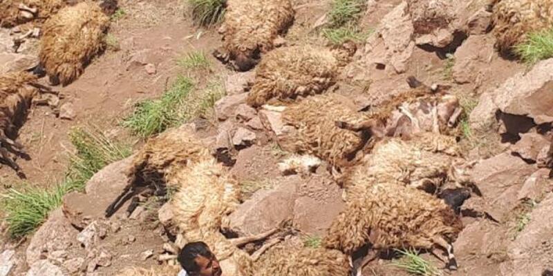 500 koyun intihar etti