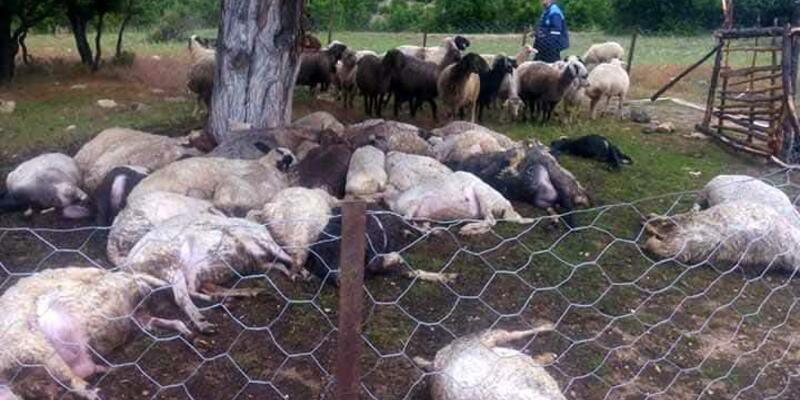 Erdemli'de yıldırım düştü 32 hayvan telef oldu
