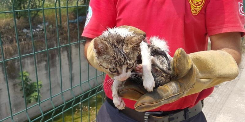 Ayağı kırık kedi mahsur kaldığı dereden kurtarıldı