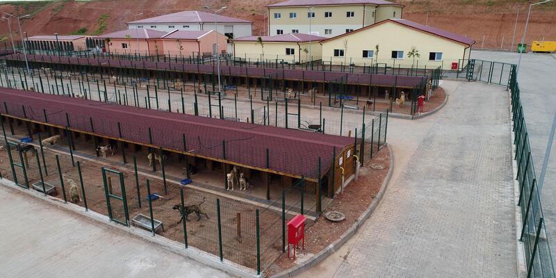 Sivas'ta 5 yıldızlı hayvan bakım merkezi hizmete girdi