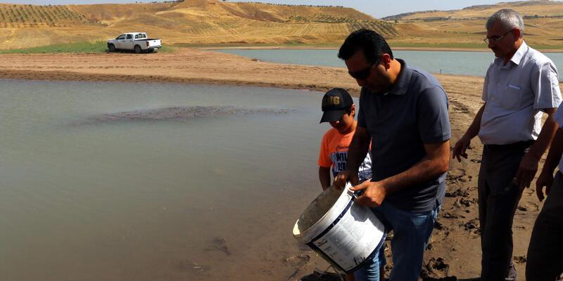 Siirt'te, göletlere 120 bin balık bırakıldı