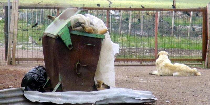 Kars'taki hayvan barınağı sorumluları hakkında soruşturma başlatıldı