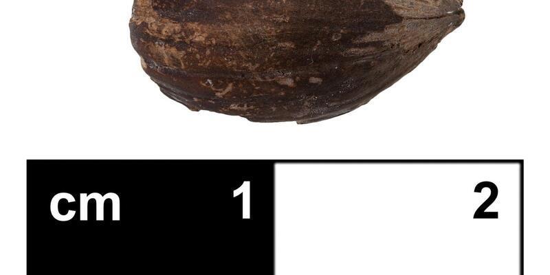 Hititlerin dini merkezinde 3 bin yıllık fındık kabuğu bulundu