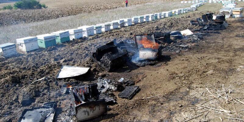 Anız yangını arı kovanlarını da yaktı