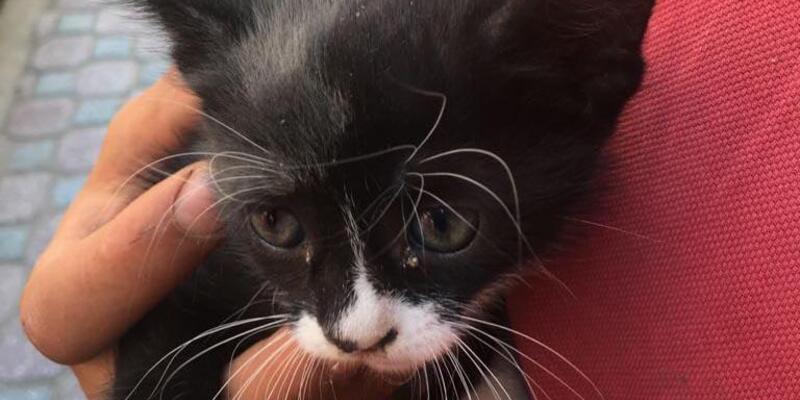 Havalandırma boşluğuna düşen yavru kediyi, itfaiye kurtardı