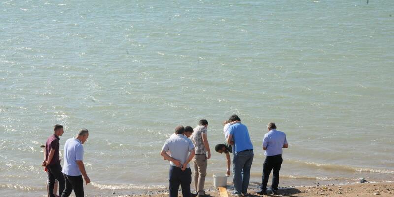 Gümüşler Barajı'na 40 bin sazanbalığı yavrusu bırakıldı