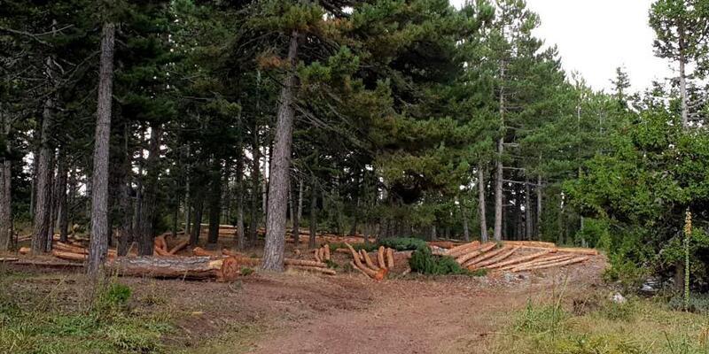 Gediz orman üretim sahalarında köylüyle işbirliği