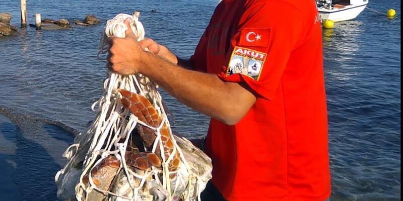Bodrum'da denizde ölü caretta caretta bulundu