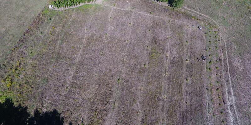 Sinop'ta bahçedeki 33 ceviz fidanını kestiler