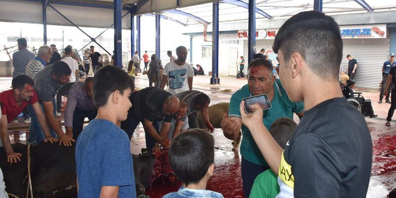 Çorlu'da kurbanlıklar çocukların gözü önünde kesildi