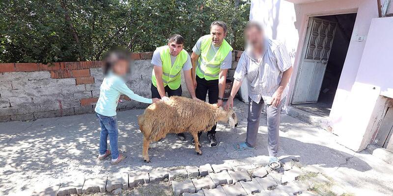 Sivas'ta yetim kız çocuğunun kurban sevinci