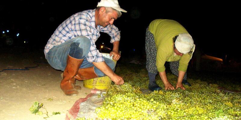 Tariş, kuru üzüm avans fiyatlarını açıkladı