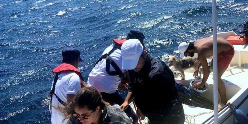 Sürüklenen teknede mahsur kalan 3 kişi ve köpekleri kurtarıldı
