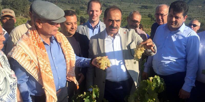 Selçuk'ta üzüm festivali coşkusu