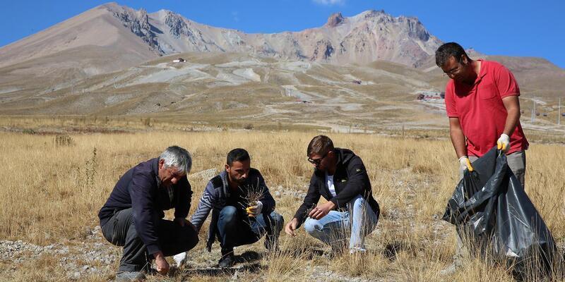 Erciyes'in yeşil dokusu için tohum topladılar