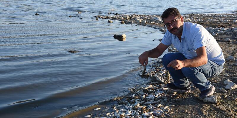 Porsuk Barajı'nda balık ve kerevit ölümleri (2)