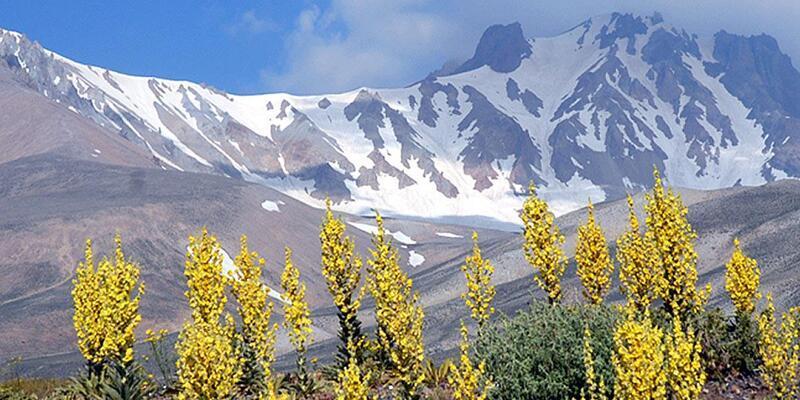 Adını Erciyes Dağı'ndan alan çiçek ve bitkiler kitap oluyor