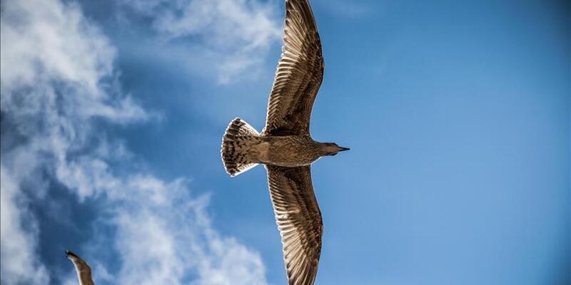 Dünyanın en büyük kuşu keşfedildi! Boyu tam 3 metre