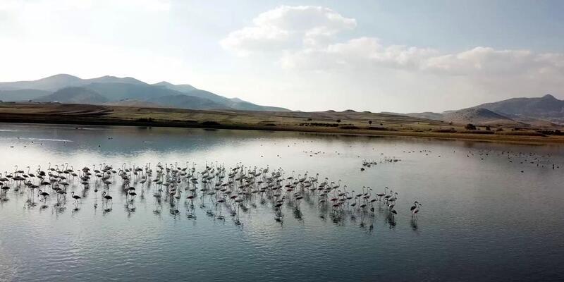 Karataş Gölü'ne flamingo akını