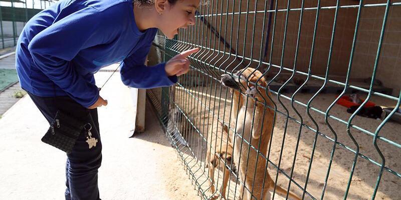 Öğrenciler, ziyaret ettikleri barınaktaki hayvanları sevdi