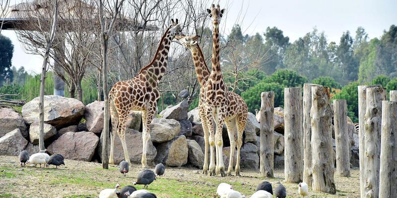 Doğal Yaşam Parkı'na 10 yılda 8.4 milyon ziyaretçi