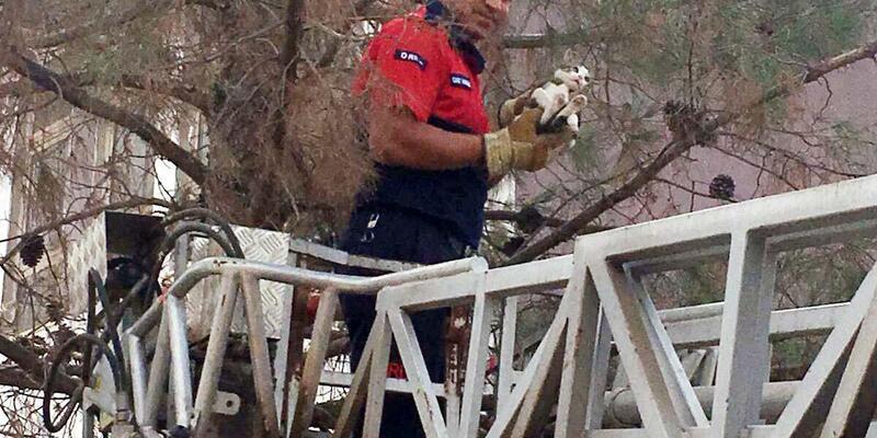 Okul bahçesindeki ağaçta mahsur kalan kedi kurtarıldı, öğrenciler sevindi